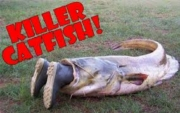 The Killer Catfish